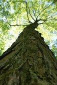 A Delaware Tree (Photo/Kendra Yost)